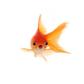 Wobbly Week 31 - Like a goldfish